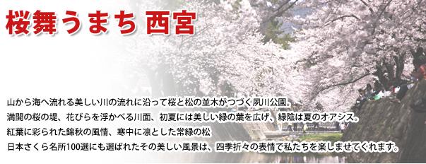 桜舞うまち 西宮