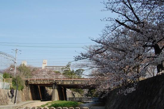 5.JR鉄橋南側 DSC_4135