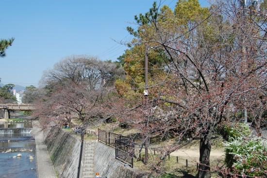 ツイッター5.夙川橋北(左岸) DSC_4093