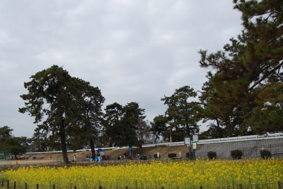 3.武庫川右岸 DSC_2218