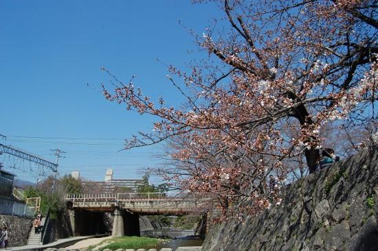 ツイッター4.JR鉄橋南(左岸)DSC_4086