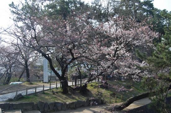 1.こほろぎ橋 DSC_4119