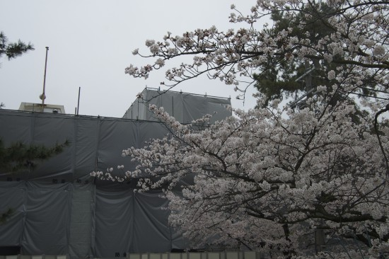 5.夙川公民館前 DSC_4387