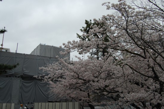 3.夙川公民館前 DSC_4808