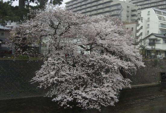 4.羽衣橋南 DSC_4381