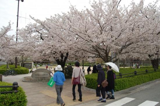4.桜めぐりミニツアー(震災記念碑公園)