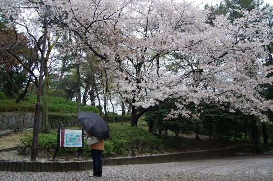 13.お花見ウォーク(西田公園) DSC_5555