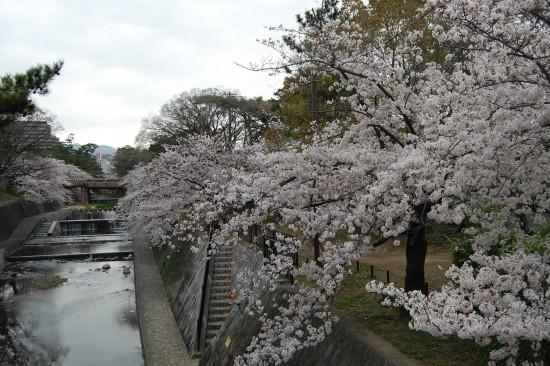 7.夙川橋北 DSC_4836