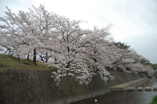 6.JR鉄橋南 DSC_4823