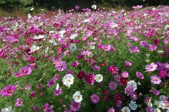 1.花(接近して撮影) DSC_6499