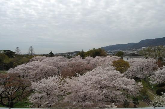 4月4日(土)屋上から DSC_5269