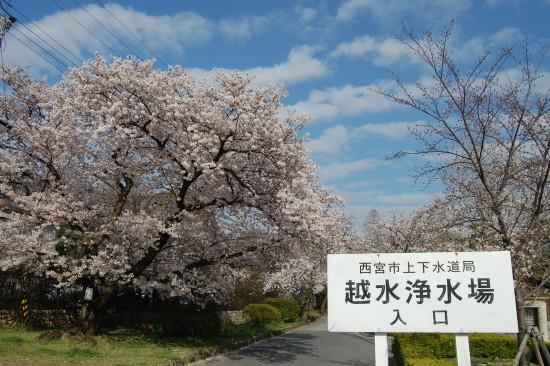 4月2日(木)西入口 DSC_4774