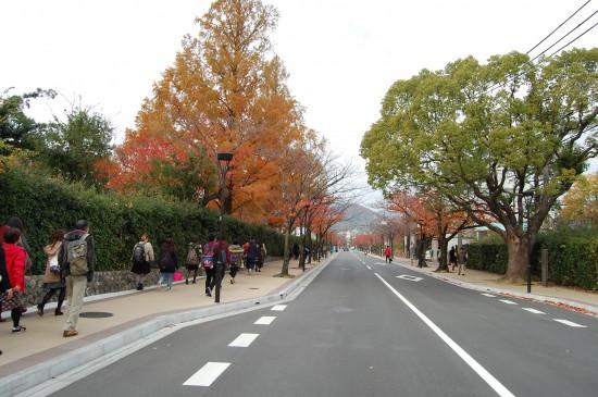 3.学園花通り DSC_6270