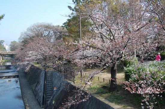 6.夙川橋 DSC_4145