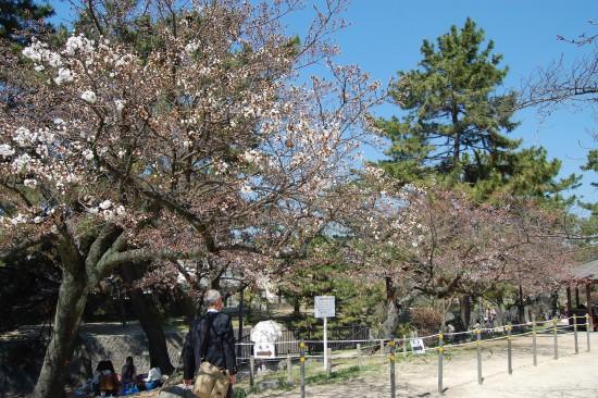 ツイッター2.阪急夙川駅すぐ北(左岸) DSC_4044