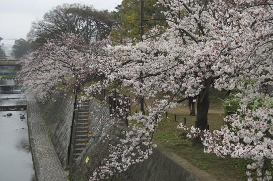 9.夙川橋北 DSC_4413
