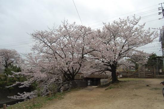 5.JR鉄橋北 DSC_4819