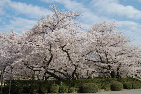 4月2日(木)はいってすぐ左 DSC_4764